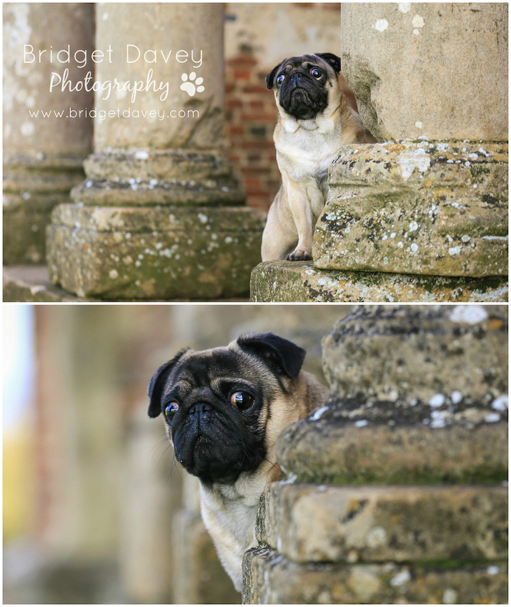 Milo | Dog Photography Ampthill, Bedfordshire0