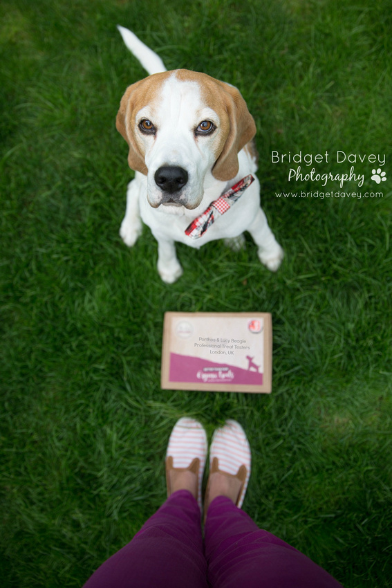Huxley Hounds Treat Test | The Beagles