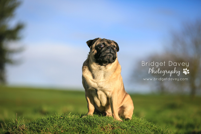 Milo | Dog Photography Ampthill, Bedfordshire4