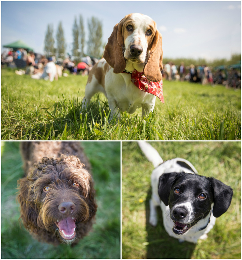 Appledown Dog Show | May 2016