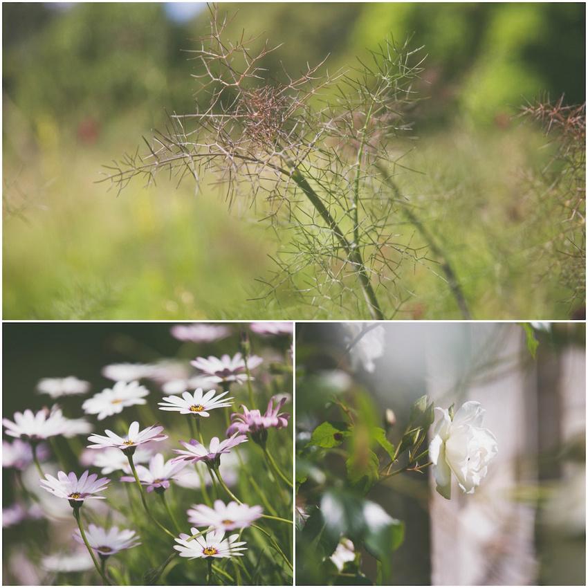 Woburn Abbey - Garden Photography Course