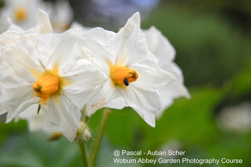 Woburn Abbey - Garden Photography Course | Pascal - Auban Scher