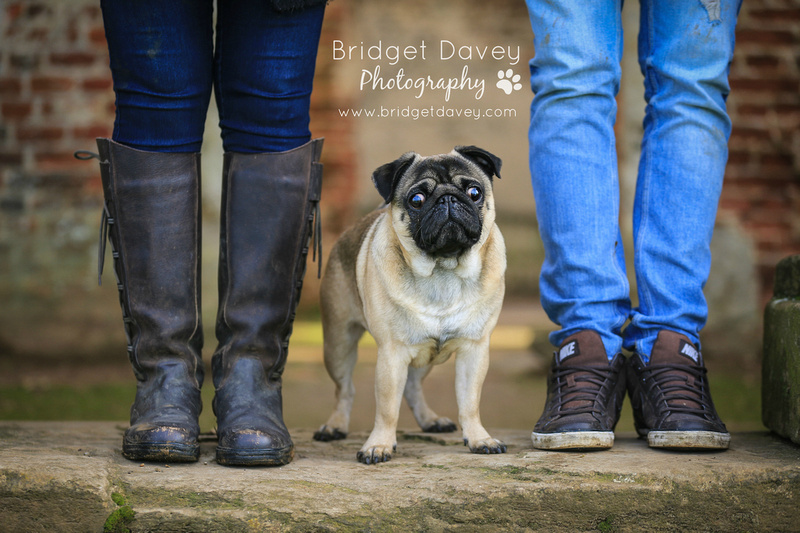 Milo | Dog Photography Ampthill, Bedfordshire7