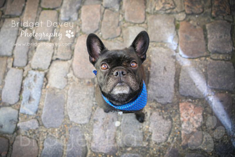 Marlene | London Dog Photography