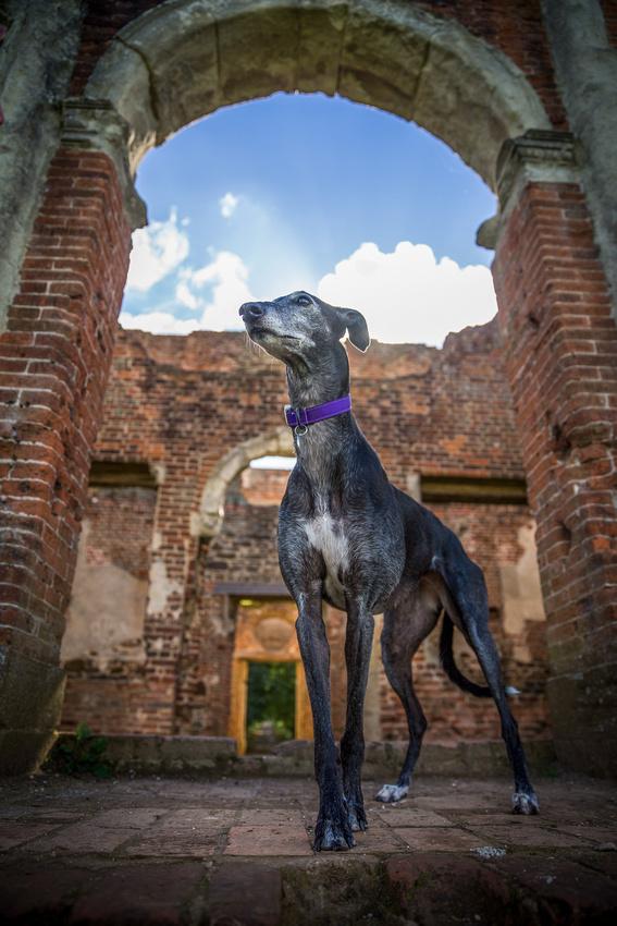 Nicola | Dog Photography Bedfordshire