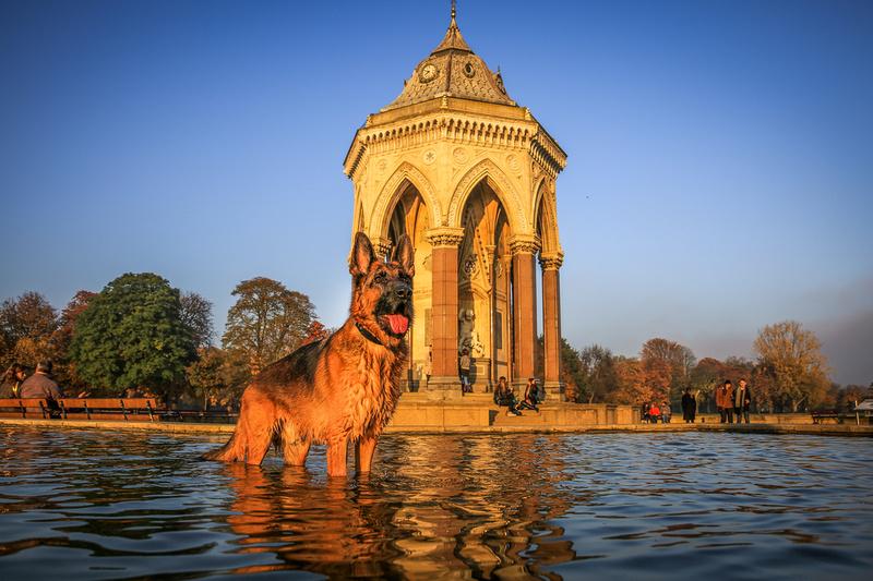Finn | London Dog Photography