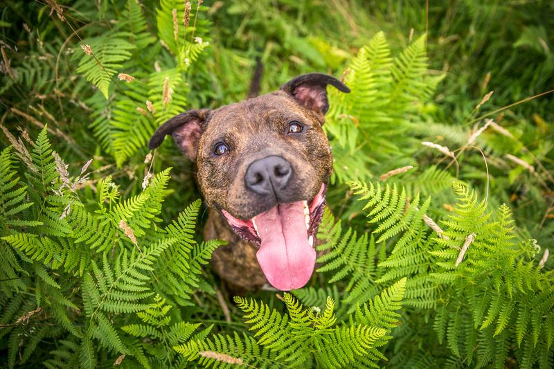 Dave - Dog Photography Bedfordshire