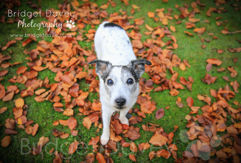 Mollie | Dog Photography Bedfordshire
