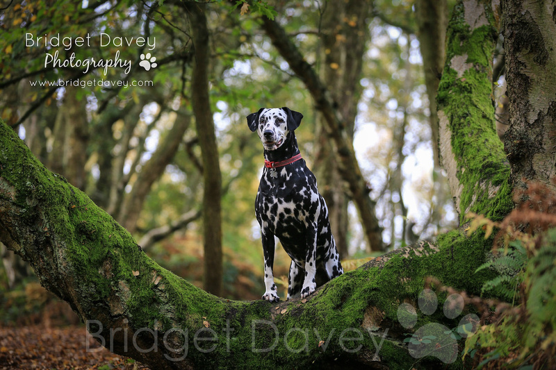 Domino | Dog Photography Bedfordshire