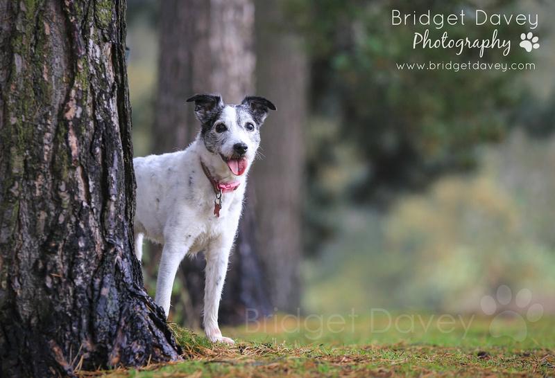 Mollie | Dog Photography Bedfordshire