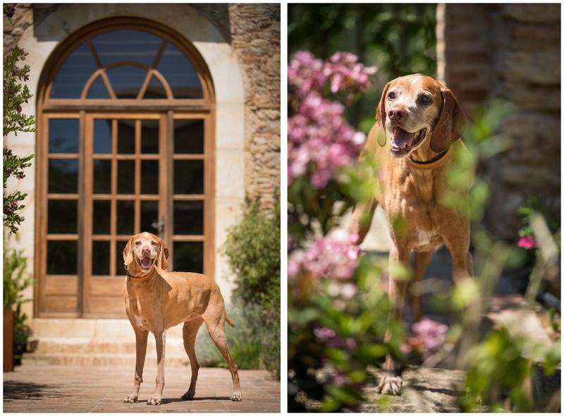 Barkelona   Bridget Davey  - London Dog Photography.