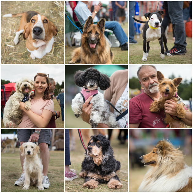 Rushmere Dog Show 2016 | Bridget Davey - Professional Dog Photography Bedfordshire