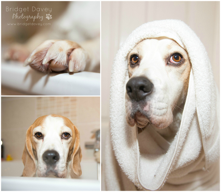 The Beagles | Whiffy Dog Soap Review