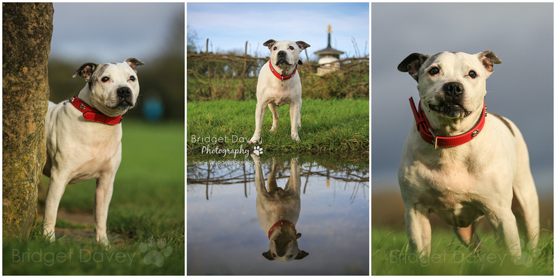 Ty | Dog Photography Milton Keynes