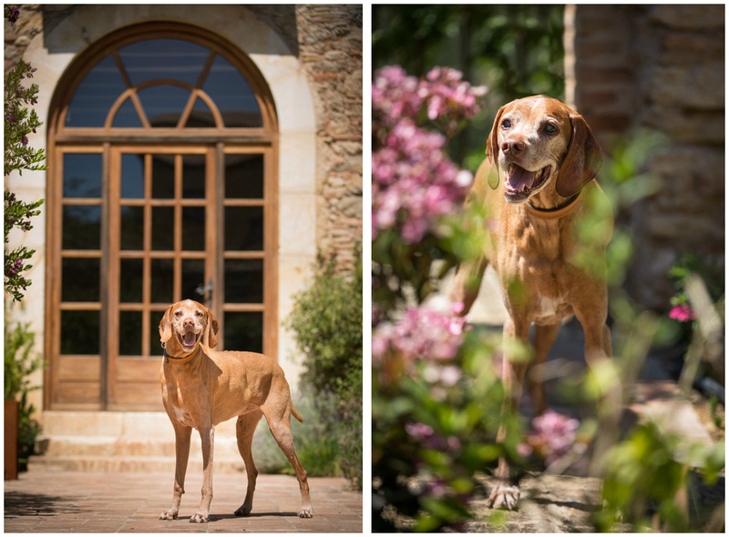 Barkelona | Bridget Davey  - London Dog Photography.