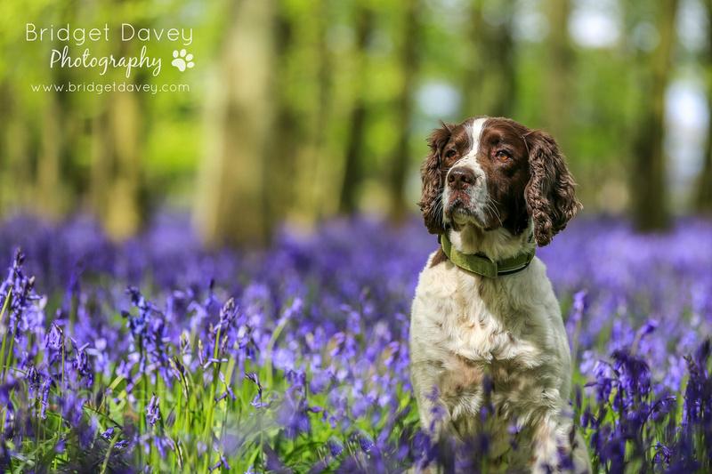 Freckles | Dog Photography Hertfordshire