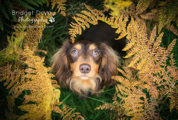 The Huxley Hounds | Dog Photography London
