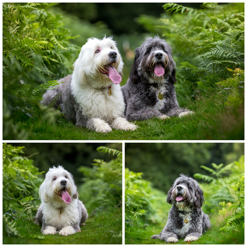 Bonnie & Sophie | Dog Photography Bedfordshire