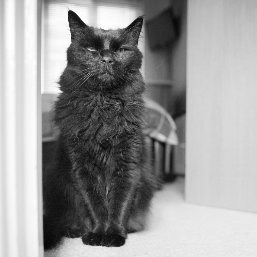 Frankie | Cat Photography Milton Keynes, Buckinghamshire