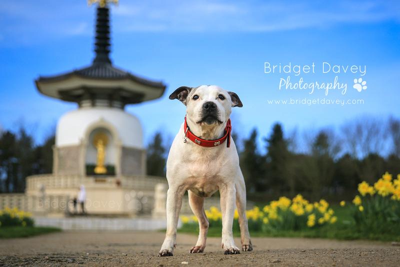 Ty | Dog Photography Milton Keynes