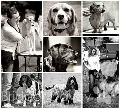 Appledown Dog Show