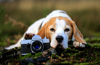 Professional Dog Photography Bedfordshire, Buckinghamshire, Hertfordshire & London
