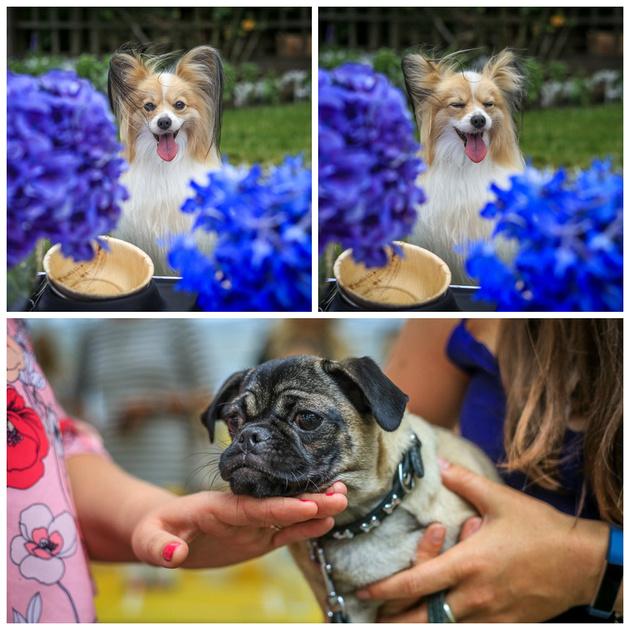 Belgrave Dog Show | London Dog Photography