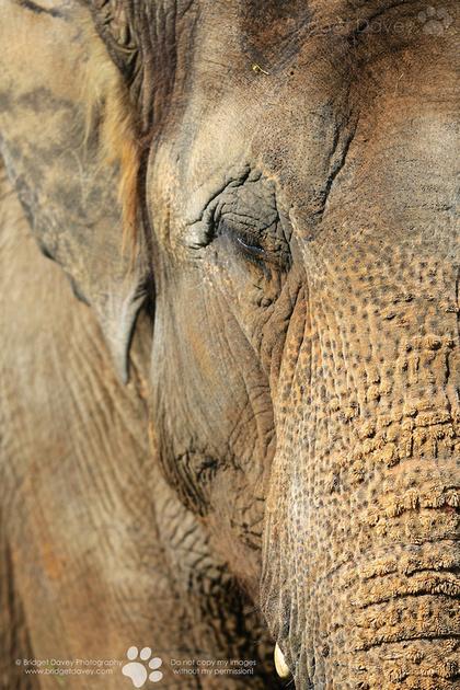 Woburn Safari Park | Woburn, UK5