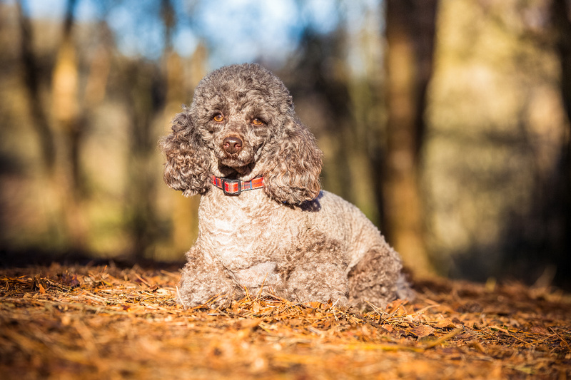 Buckles | Dog Photography Bedfordshire
