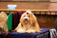 Crufts 2015 | Toy and Utility Dogs 2015 7