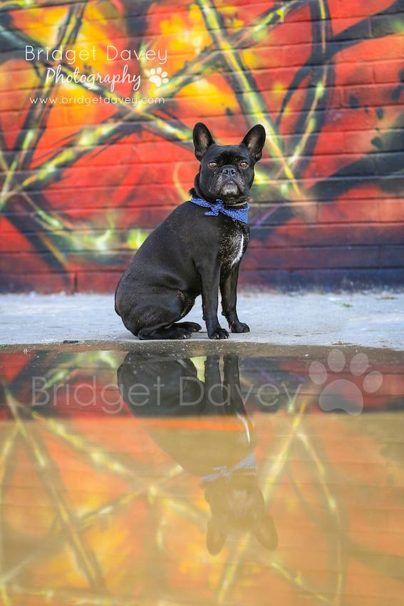 Marlene   London Dog Photography
