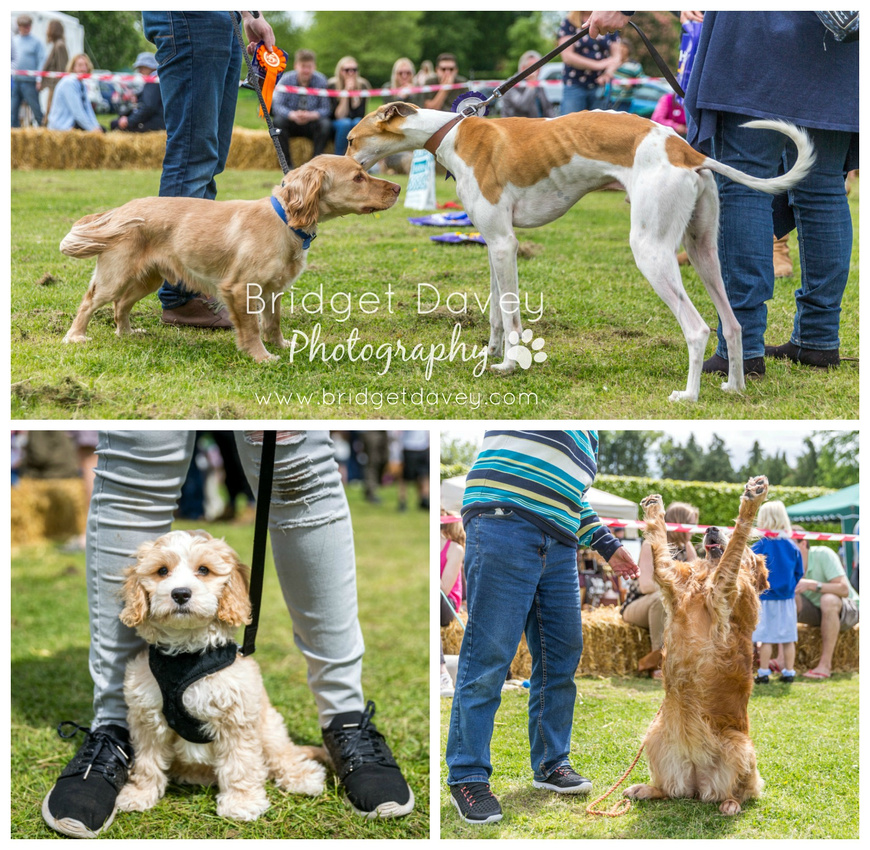 Stewkley Dog Show & Country Fayre