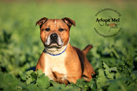 Rusty | HULA Animal Rescue